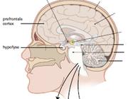 De fysiotherapeut en het stresssysteem