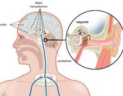 Heeft veroudering effect op het adaptieve vermogen van de intervertebrale discus?