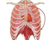Over het nut van ademspiertraining in een fysiotherapeutische setting